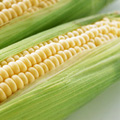 pic_corn.jpg